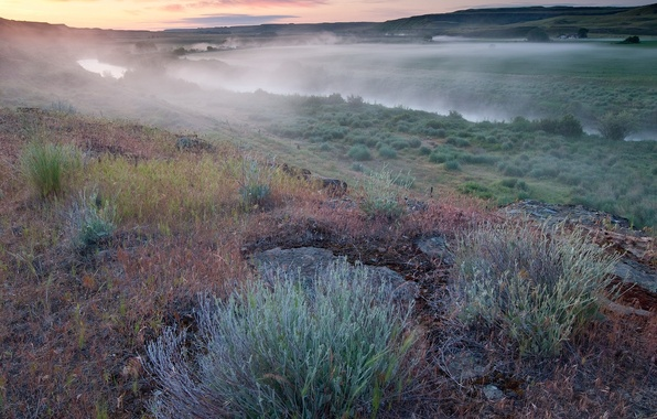 Картинка поле, трава, туман, река, Утро