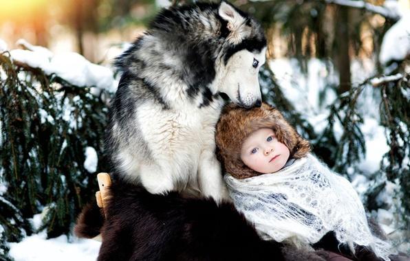 Картинка зима, снег, ребенок, собака, дружба, хаски