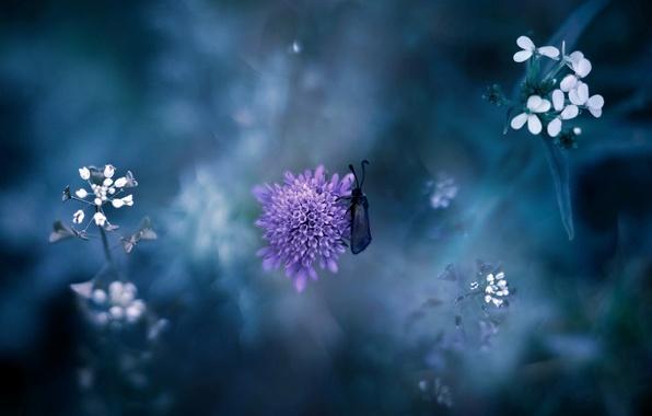 Картинка цветок, фиолетовый, трава, макро, природа, насекомое