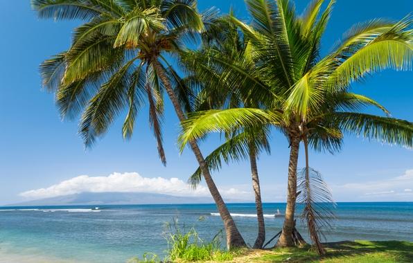Картинка море, солнце, тропики, пальмы, побережье, Гавайи, США