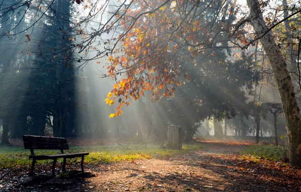 Картинка осень, лучи, свет, природа, парк, лавка