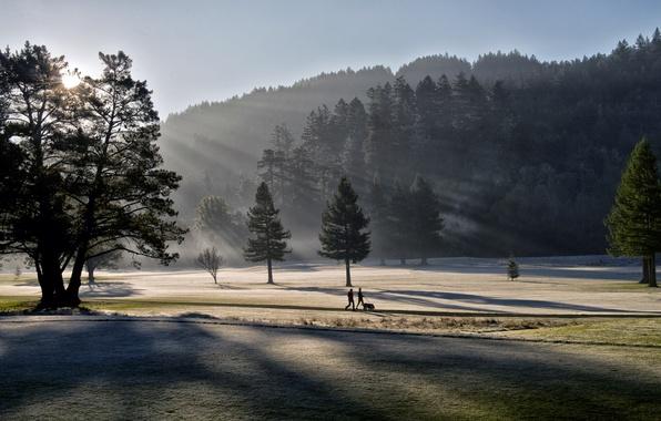 Картинка свет, пейзаж, парк, утро
