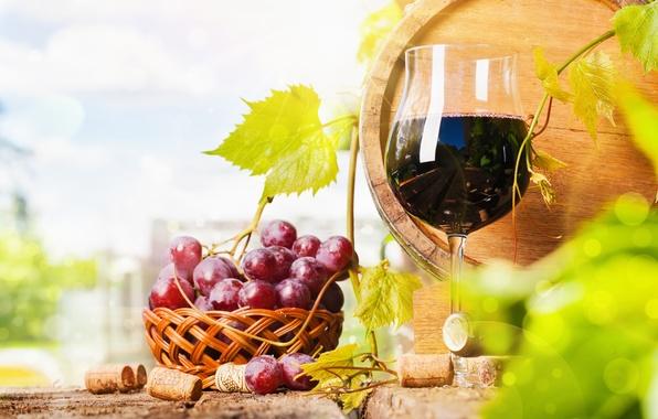 Картинка вино, бокал, бутылка, виноград, бочка, корзинка
