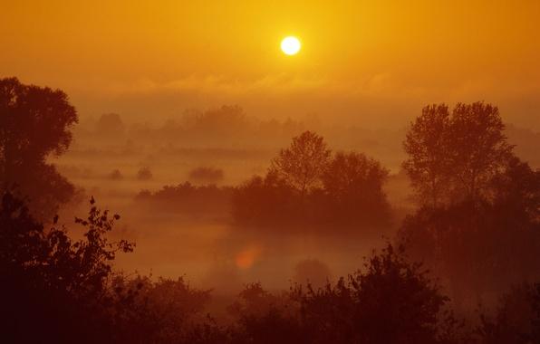Картинка лес, небо, солнце, пейзаж, природа, вечер, sunset, закат солнца, scenery, деревья view