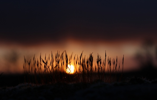 Картинка трава, солнце, свет, рассвет, мох, Природа, утро