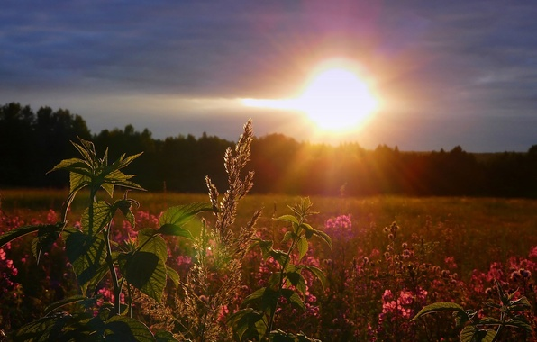 Картинка поле, небо, солнце, закат, цветы