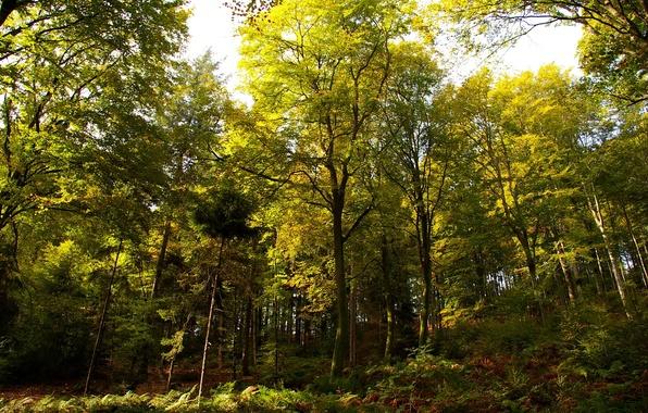 Картинка осень, лес, деревья, Германия, день, солнечный