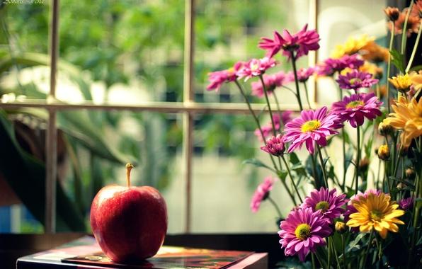 Картинка цветы, желтый, фон, розовый, красное, widescreen, обои, настроения, яблоко, размытие, окно, книга, wallpaper, цветочки, широкоформатные, …