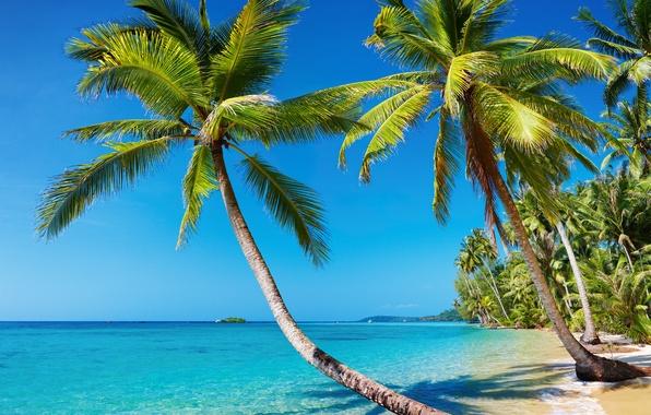 Картинка море, пляж, лето, пейзаж, тропики, пальмы, отдых, остров, Природа, отпуск, курорт