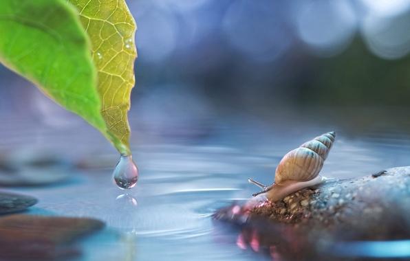 Картинка вода, лист, блики, камень, капля, улитка