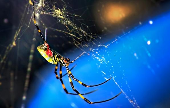 Картинка макро, природа, паутина, паук, насекомое