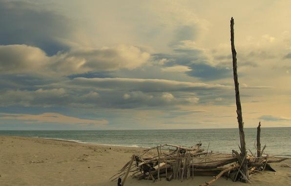 Берег ветки море обои фото картинки