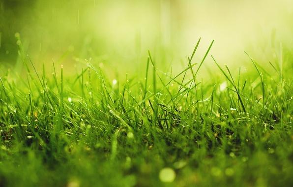 Картинка трава, капли, макро, природа, дождь