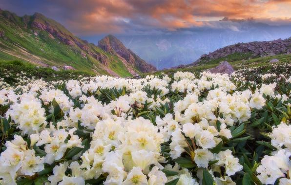 Картинка небо, облака, цветы, горы, природа