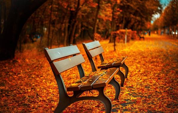 Обои осень, листья, скамейка, парк, листва, лавка, золотая
