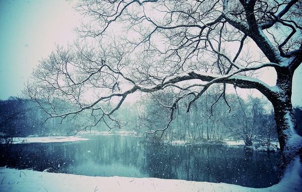 Картинка зима, снег, озеро, дерево, winter, lake, tree, snowing
