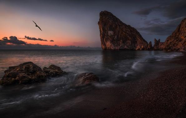 Картинка море, пейзаж, закат, скалы, птица, берег, Крым, Дива, Симеиз