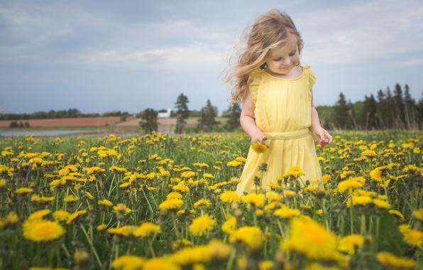Картинка цветы, природа, настроение, луг, девочка, одуванчики