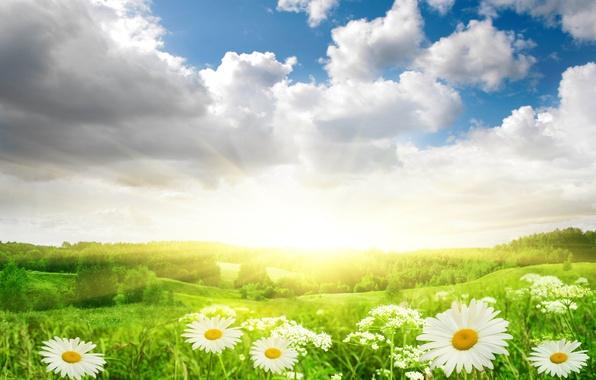Картинка поле, небо, трава, солнце, облака, свет, пейзаж, цветы, природа, ромашки