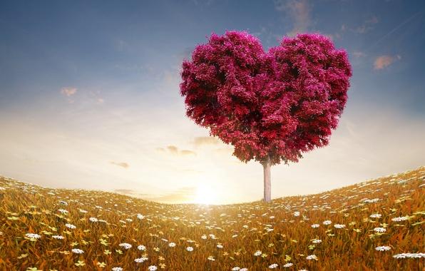 Картинка поле, небо, облака, любовь, цветы, природа, дерево, романтика, сердце, розы, love, День святого Валентина, sky, …