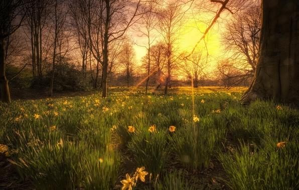 Картинка свет, деревья, закат, цветы, природа