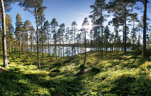 Картинка зелень, лес, трава, солнце, деревья, озеро, берег, Швеция, Smaland
