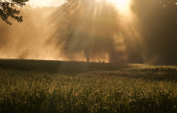 Картинка зелень, трава, листья, солнце, макро, лучи, деревья, природа, фон, дерево, widescreen, обои, листва, утро, луг, …