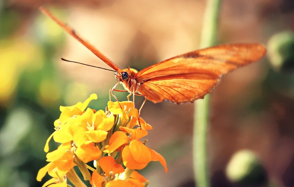 Картинка цветок, желтый, фон, бабочка, оранжевая
