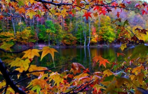 Картинка осень, листья, макро, пейзаж, природа