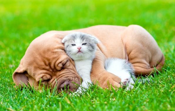 Картинка трава, взгляд, друг, сон, собака, пушистый, щенок, котёнок