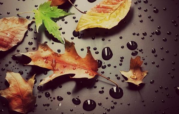 Картинка листья, вода, капли, макро, желтый, зеленый, роса, фон, обои, wallpaper, листочки, drop, широкоформатные, листики, background, …