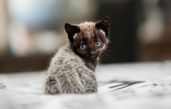 Картинка размытость, сидит, Котёнок
