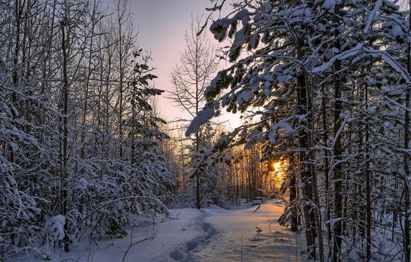 Картинка лес, снег, пейзаж, природа, утро