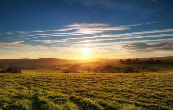 Картинка небо, трава, солнце, облака, деревья, Поле, горизонт