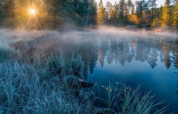 Картинка иней, солнце, лучи, свет, природа, туман, озеро, река, утро