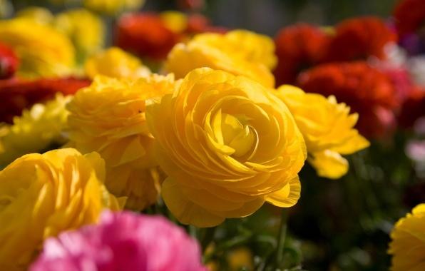 Картинка макро, цветы, розы, букет, желтые, разные