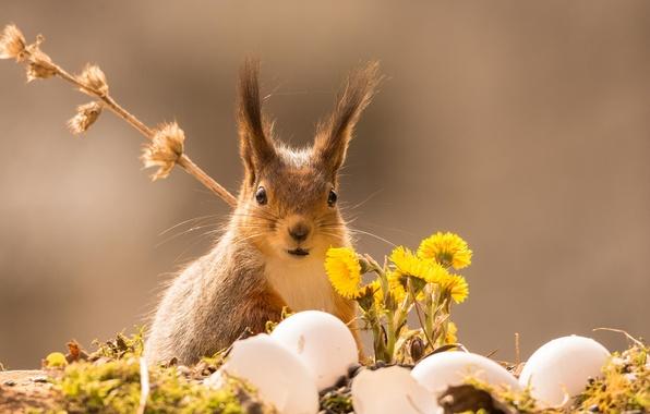картинки весна с животными на рабочий стол