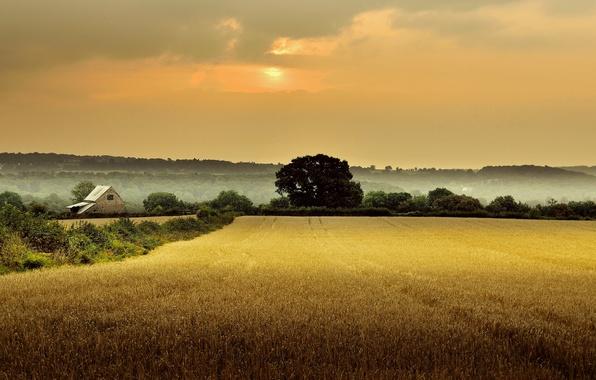 Картинка поле, деревья, туман, дом, рассвет, Англия, утро, Глостершир