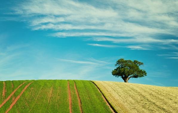 Картинка поле, небо, облака, дерево, колея
