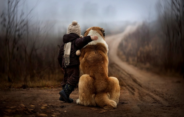 Картинка дорога, осень, лес, природа, туман, ребенок, собака, мальчик