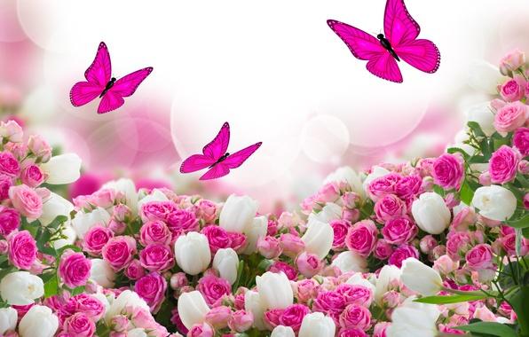 Фото цветы бабочки