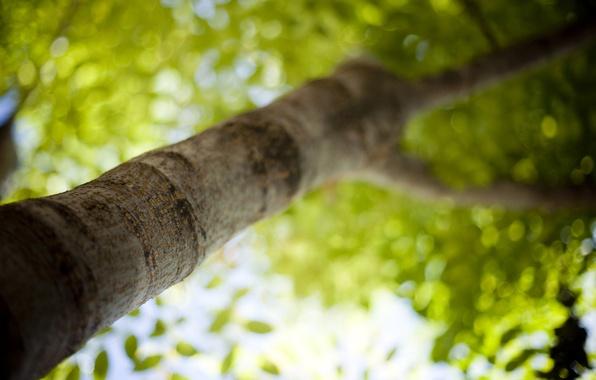 Картинка зелень, лето, свет, деревья, свежесть, ветки, тепло, фото, дерево, настроение, листва, листок, фокус, размытие, ветка, …