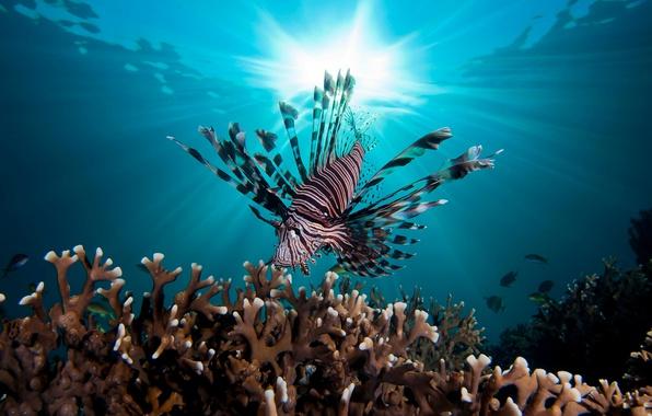 Картинка море, вода, свет, рыбы, океан, под водой, fish, рыба лев