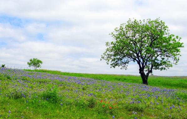 Картинка небо, трава, облака, цветы, дерево, весна, луг