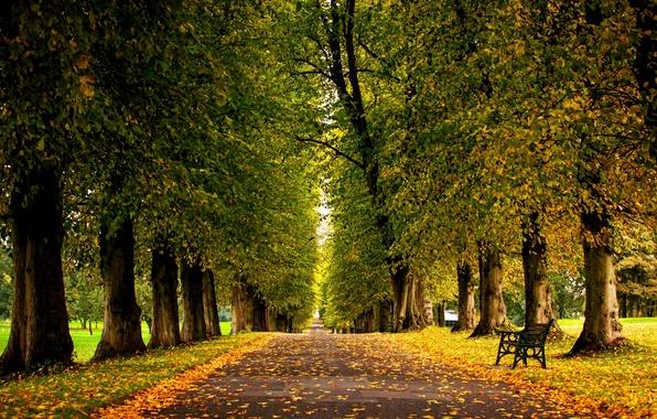 Картинка осень, трава, листья, деревья, скамейка, природа, парк, colors, hdr, grass, прогулка, forest, road, trees, nature, …