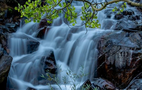 Картинка вода, камни, скалы, листва, водопад, поток, ветка