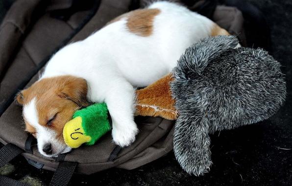 Картинка игрушка, собака, спит, щенок, утка