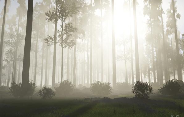 Картинка лес, солнце, деревья, природа, туман, восход, утро, кусты