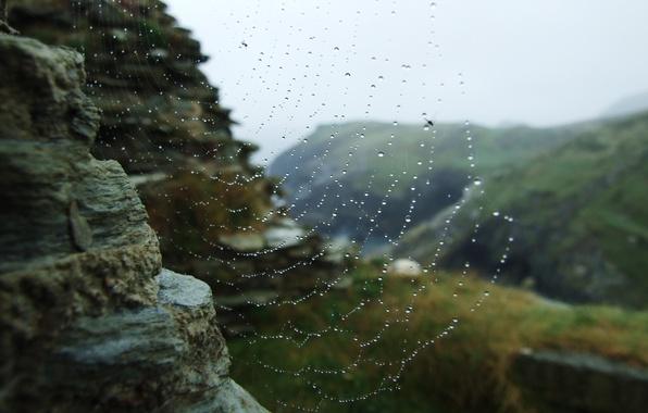 Картинка вода, капли, макро, роса, паутина, сеть.камни