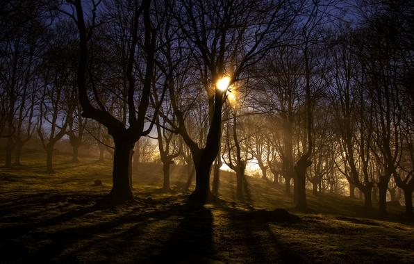 Картинка лес, свет, пейзаж, природа, туман, утро